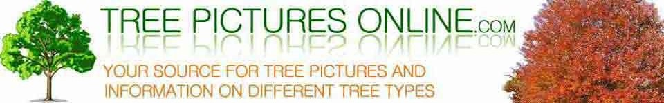 Tree Pictures, Tree Images, Tree Photos