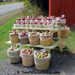 Apples For Sale: Farm Apples on Road Side Display