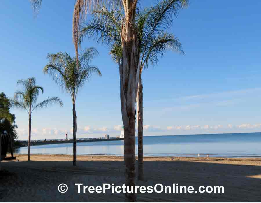 Palm Trees Line the Beach in Port Dover, Ontario